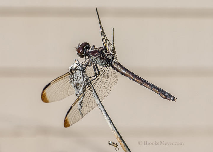 001 Dragon Fly 4498