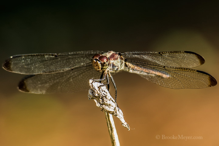 003 Dragon Fly 4546